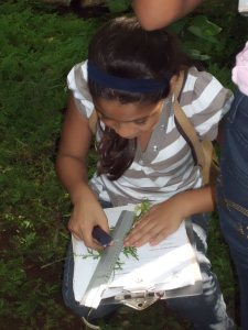 Abriendo Mentes student measures a leaf